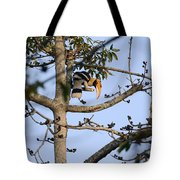 Great Indian Hornbill Tote Bag