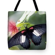 Great Mormon And Mimosa - Fs000581 Tote Bag