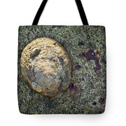 Great Owl Limpet Tote Bag