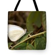 Great Southern White Butterfly Tote Bag by Rudy Umans