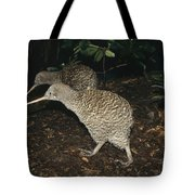 Great Spotted Kiwi Breeding Pair New Tote Bag