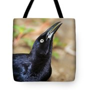 Great-tailed Grackle Tote Bag