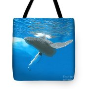 Great Wings Of New England Tote Bag