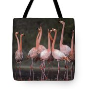 Greater Flamingo Group Courtship Dance Tote Bag