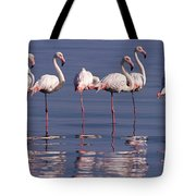Greater Flamingo Group Tote Bag