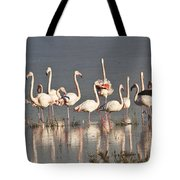 Greater Flamingos At Laguna De La Fuente De Piedra Tote Bag