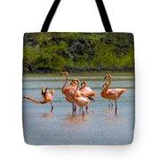 Greater Flamingos Tote Bag