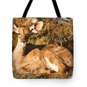 Greater Kudu Calf Tote Bag