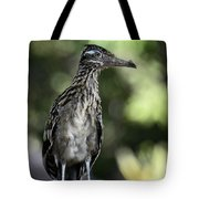 Greater Roadrunner  Tote Bag
