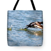 Greater Scaup Takes Flight Tote Bag
