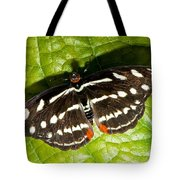 Grecian Shoemaker Butterfly Tote Bag