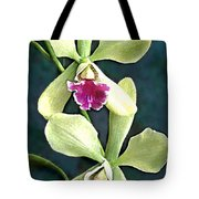Green And Purple Cattleya Orchids Tote Bag
