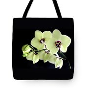 Green And Wine Hybrid Phalaenopsis Orchid Tote Bag