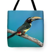 Green Aracari On Branch Tote Bag