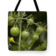 Green Cherry Tomatoes On The Vine Tote Bag