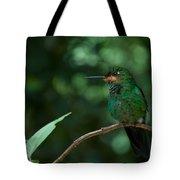 Green-crowned Brilliant Tote Bag