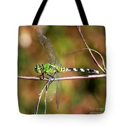 Green Dragonfly On Twig Square Tote Bag