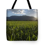 Green Field In Sunset Tote Bag