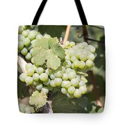 Green Grapes Growing On Grapevines Closeup Tote Bag