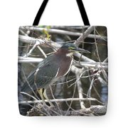 Green Heron In Everglades Np Tote Bag