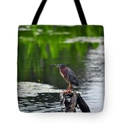 Green Heron Perch Tote Bag