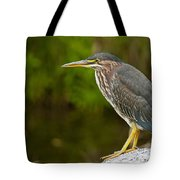 Green Heron Pictures 378 Tote Bag