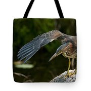 Green Heron Pictures 386 Tote Bag
