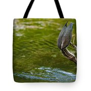 Green Heron Pictures 414 Tote Bag