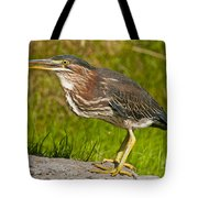 Green Heron Pictures 449 Tote Bag