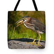 Green Heron Pictures 457 Tote Bag