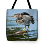 Green Heron Pictures 469 Tote Bag