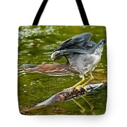 Green Heron Pictures 522 Tote Bag