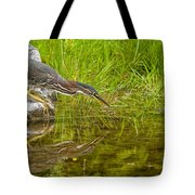 Green Heron Pictures 534 Tote Bag