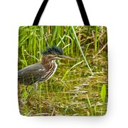 Green Heron Pictures 545 Tote Bag