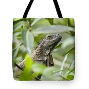 Green Iguana In Lowland Rainforest Tote Bag
