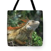 Green Iguana Male Portrait Central Tote Bag