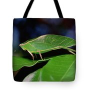 Green Leaf-mimic Katydid Steirodon Tote Bag