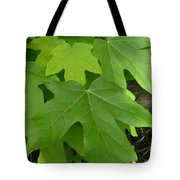 Green Maple Leaves Tote Bag