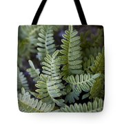 Green Resurrection Fern Air Plant Tote Bag