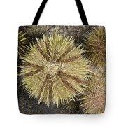 Green Sea Urchins Tote Bag