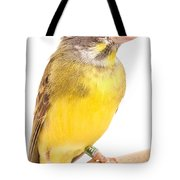 Green Singing Finch Crithagra Mozambicus Tote Bag