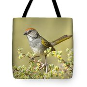 Green-tailed Towhee Tote Bag
