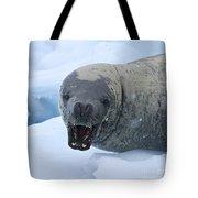 Greetings From Antarctica.. Tote Bag