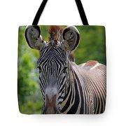 Grevy Zebra Tote Bag