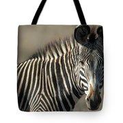 Grevys Zebra Standing In Plains Kenya Tote Bag