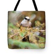 Grey Jay Perisoreus Canadensis Watching Perched Tote Bag