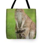 Grey Kangaroo And Joey  Tote Bag