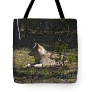 Grey Wolf   #3273-signed Tote Bag