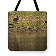 Grey Wolf   #4427 Tote Bag