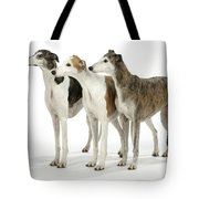 Greyhound Dogs Tote Bag